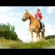 Shooting photo animaux domestiques Belgique